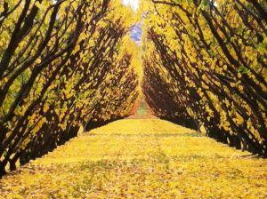 Fruit tree autumn leaves