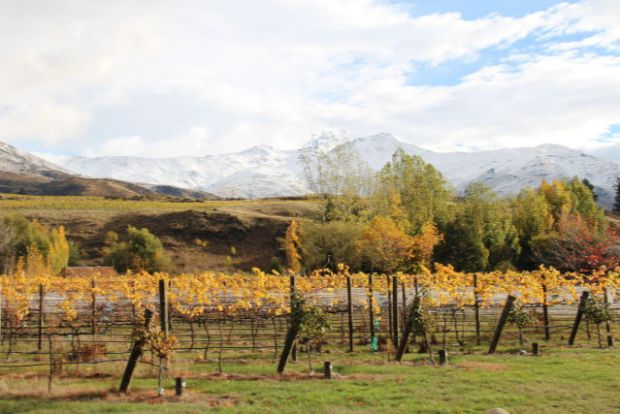 Kawarau vineyards