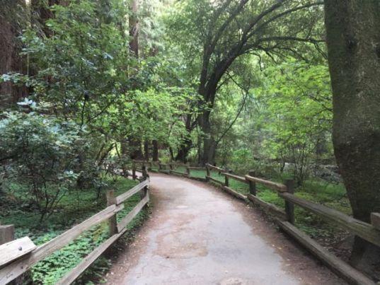 Muirs Woods walking track entrance
