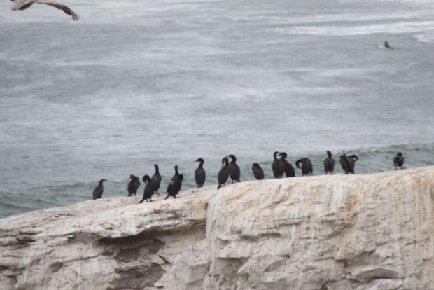 Natural Bridges State Park sea birds