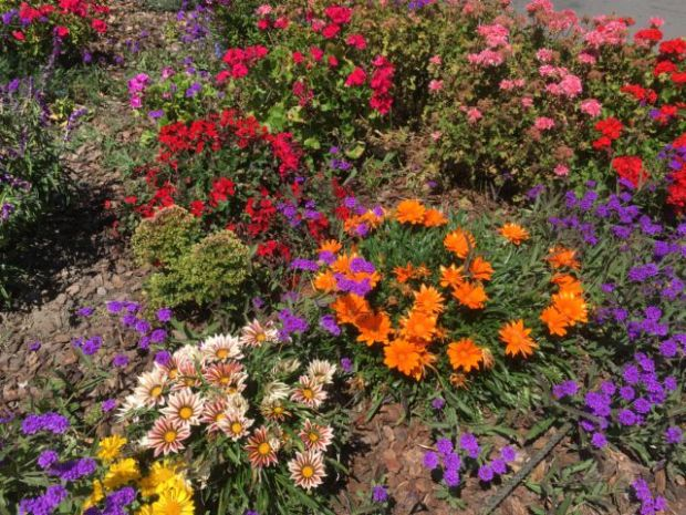 San Francisco Wharf flowers