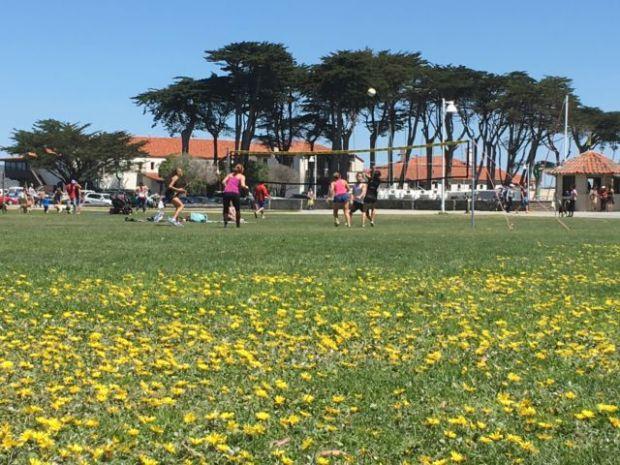 Yacht Harbor lawn San Francisco