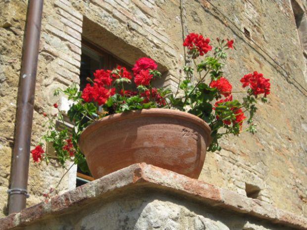 Monticchiello flowers