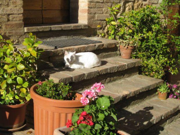 Tuscany scenic drive, a Pienza cat