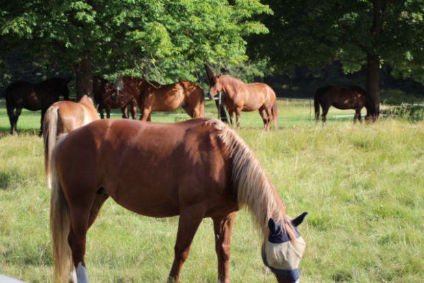 Kaknästornet horses