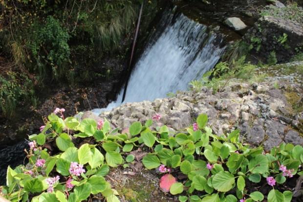 Ribeiro Frio waterfall and plants