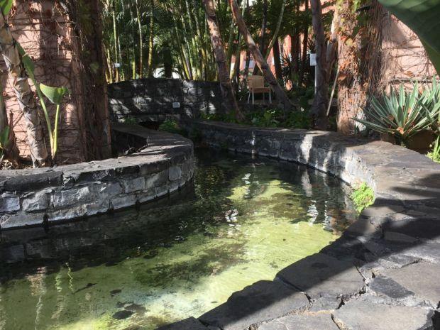 Royal Savoy Funchal pool area levada
