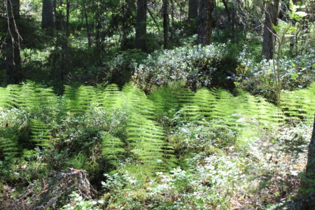 Southern Konnevesi National Park vegetation