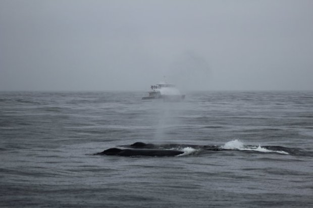 Monterey Bay whale cruise