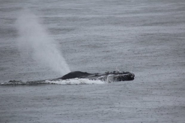 On a Monterey Bay whale watching tour