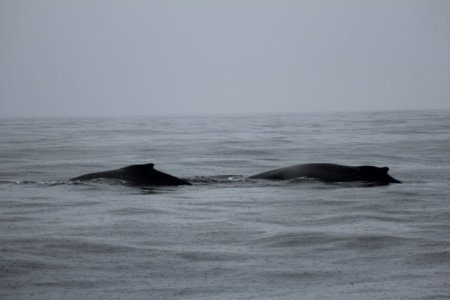 Monterey Bay whales