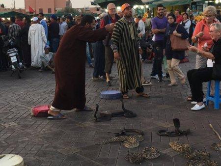 A Marrakech snake charmer