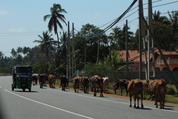 Road traffic in Kalpitiya, Sri Lanka