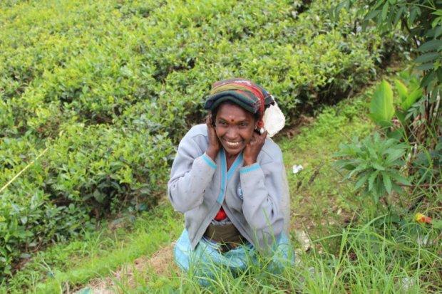 Tea plucker, Sri Lanka