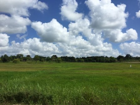Trincomalee rice fields