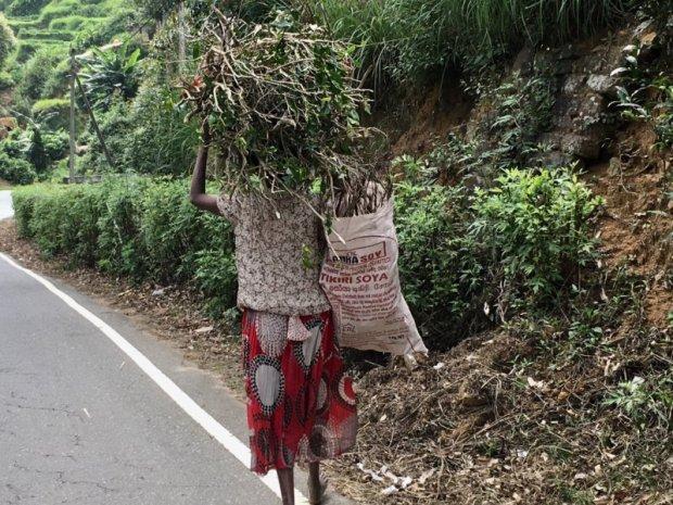 Carrying firewood in Sri Lanka tea country