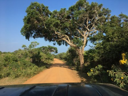 Driving in Yala National Park