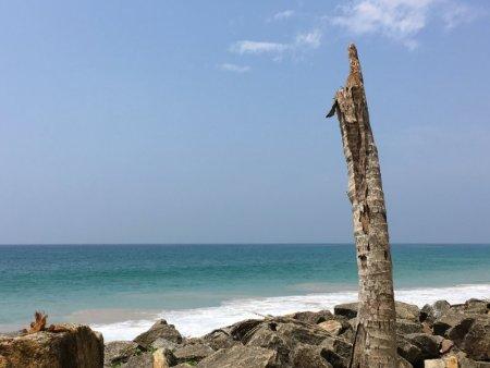 Sri Lanka's South Coast broken palm
