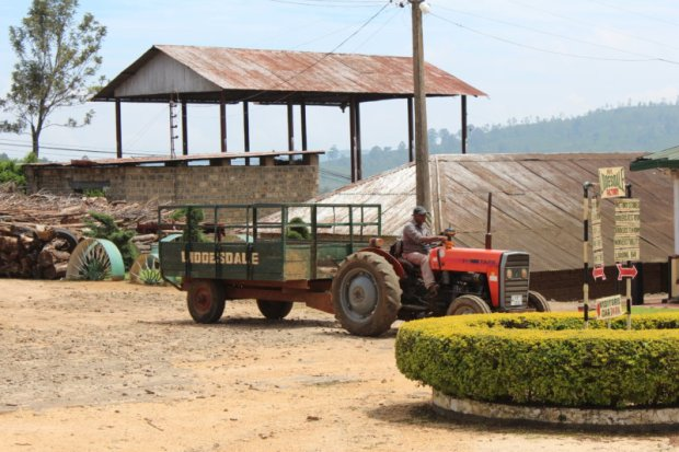 Working in tea factory