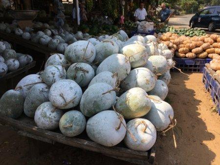 Pumpkins sold on Sri Lanka's South Coast