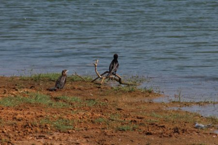 Yala National Park birds