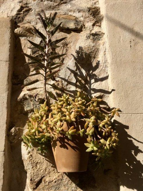 Plants on the wall, Serra de Tramuntana