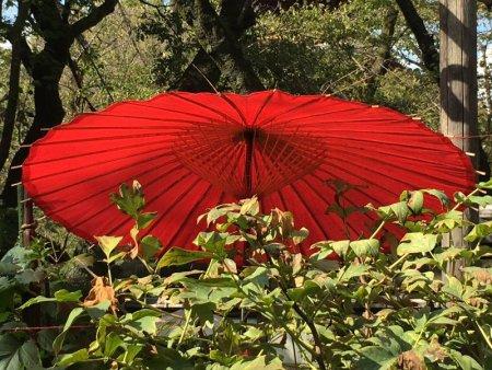 Japanese parasol, Ueno Park gardens