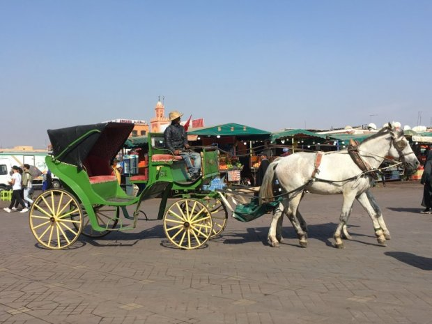 Horse and carriage, Jemaa el-Fna