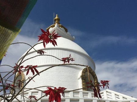 World Peace Stupa and winter flowers