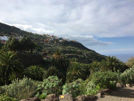 Icod de los Vinos coastline, Tenerife