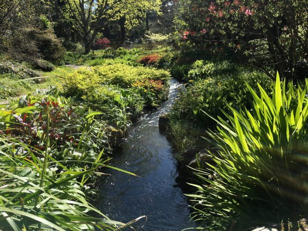 Wicklow Mountains scenic drive: Mount Usher Gardens