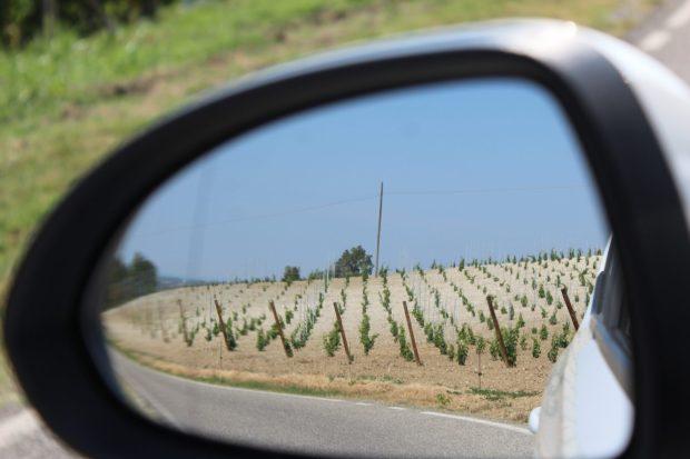 Italian vineyard, Emilia Romagna