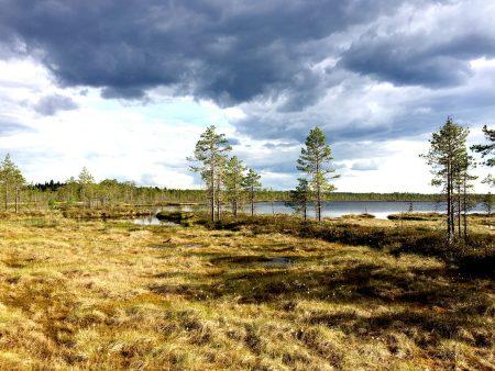 Ostrobothnia road trip: -Pohjankangas National Park