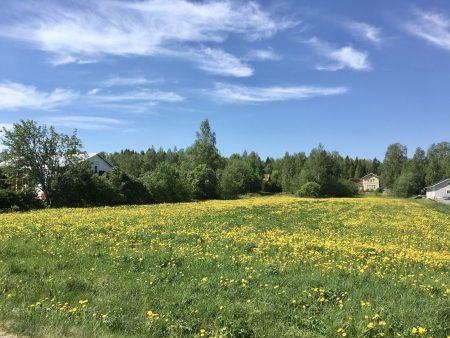 Ostrobothnia road trip in a motorhome: flowering fields
