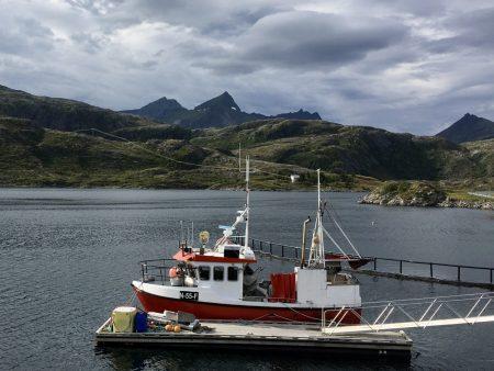 One of the many Lofoten fjords