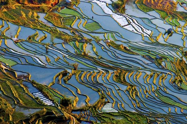 Yuan yang, Yunnan, Chine - Les Routes du Monde