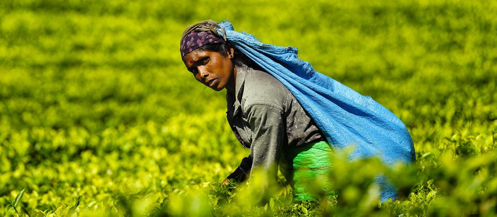 img-diapo-entete - Sri-Lanka-1600x700-8.jpg