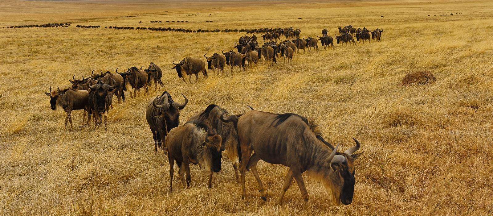 img-diapo-entete - Tanzanie-1600x700-21.jpg