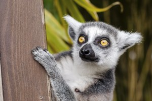 img-diapo-tab - Madagascar-1600x900-18-1.jpg