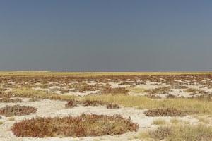 img-diapo-tab - Namibie-1600x900-31.jpg