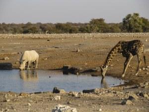 img-diapo-tab - Namibie-1600x900-36.jpg