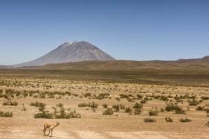 Entre Arequipa et le Canyon de Colca, pérou - Les Routes du Monde