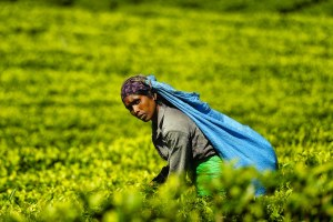 img-diapo-tab - Sri-Lanka-1600x900-17.jpg