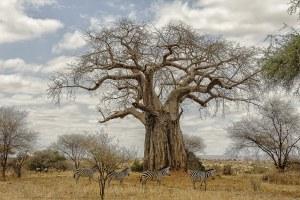 img-diapo-tab - Tanzanie-1600x900-27.jpg