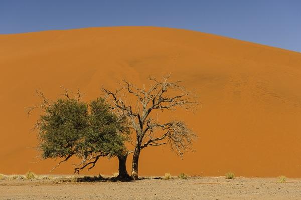 thumb - tumb-circuit-namibie.jpg