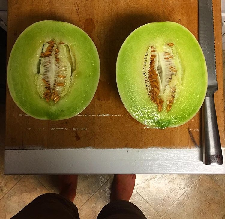 a melon straight from my garden