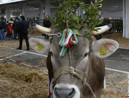 Lombardia Carne, foto d'archivio