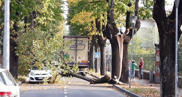 L'albero caduto in via Marconi