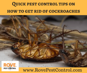 Quick Pest Control Tips On How To Get Rid Of Cockroaches Rove Pest Control