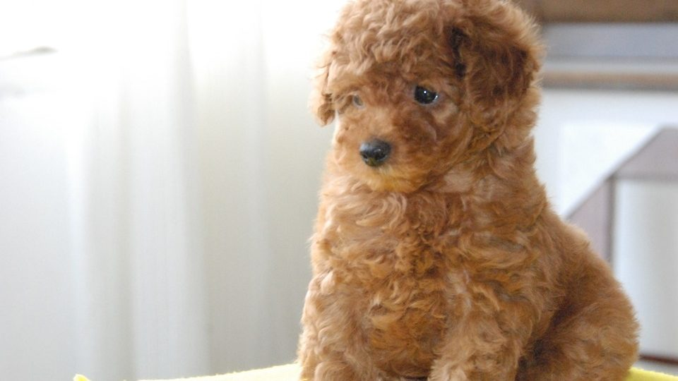 Top 101 Cute Dog Names For Your New Dog In 2019 The Dog People By Rover Com